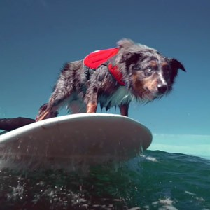 surfdog---icon
